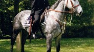 Officers, staff and four-legged friends - mounted section officer